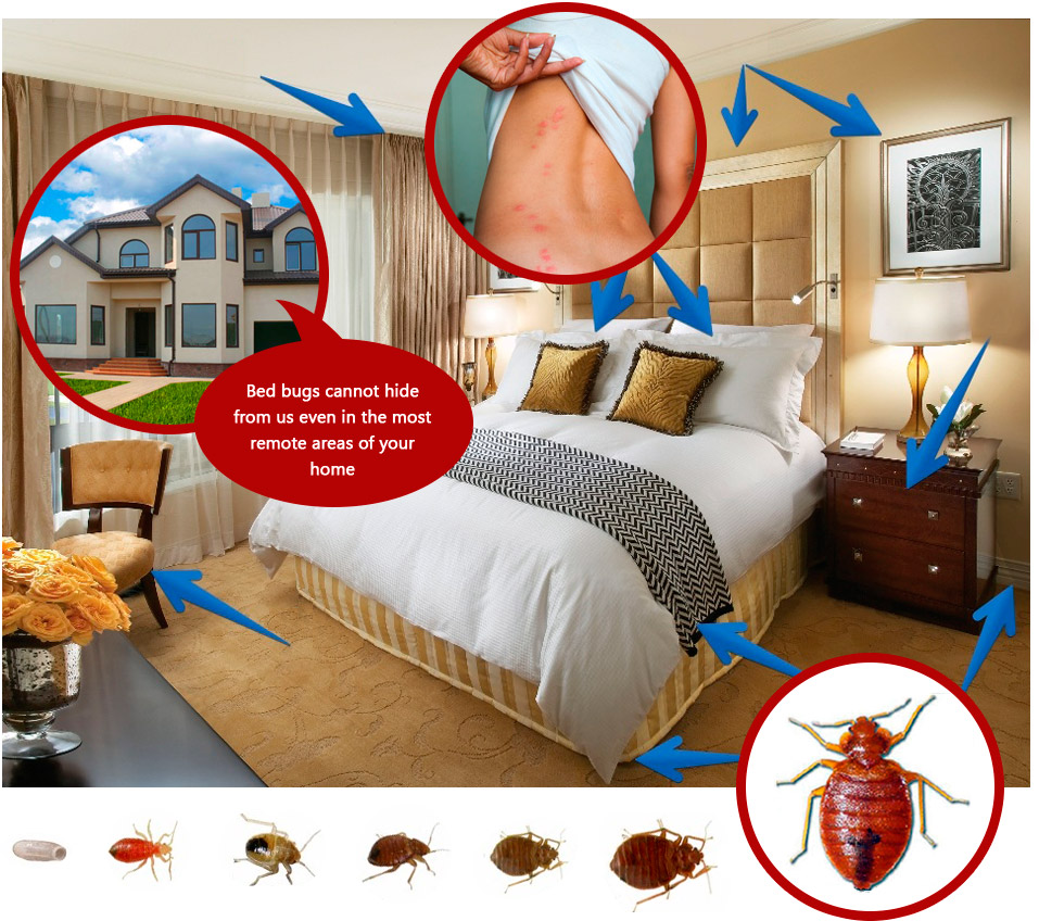 the on bed images greenway bugs encourage beds bug formula pinterest for best ideas house solution really pack